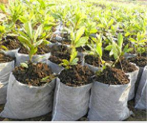 无纺布育苗袋在根种时需要去掉吗